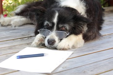 letter-writing-week-dog-1_0