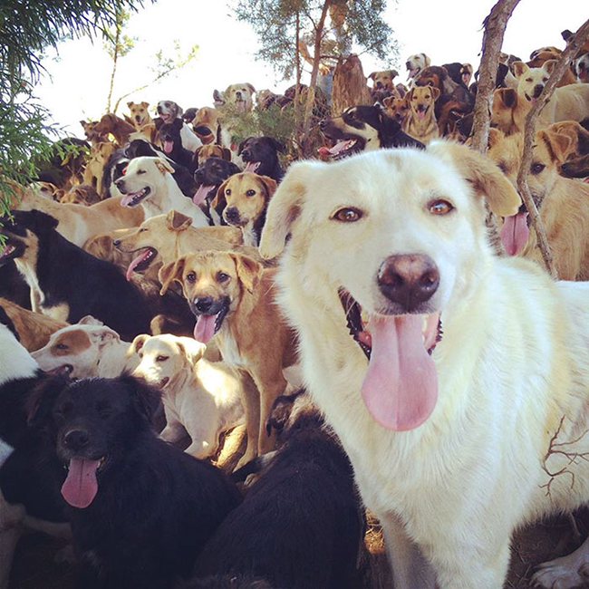 refugio de perro